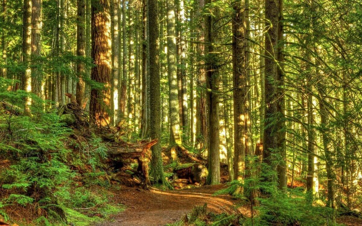 фотографии леса для печати для укрепления его