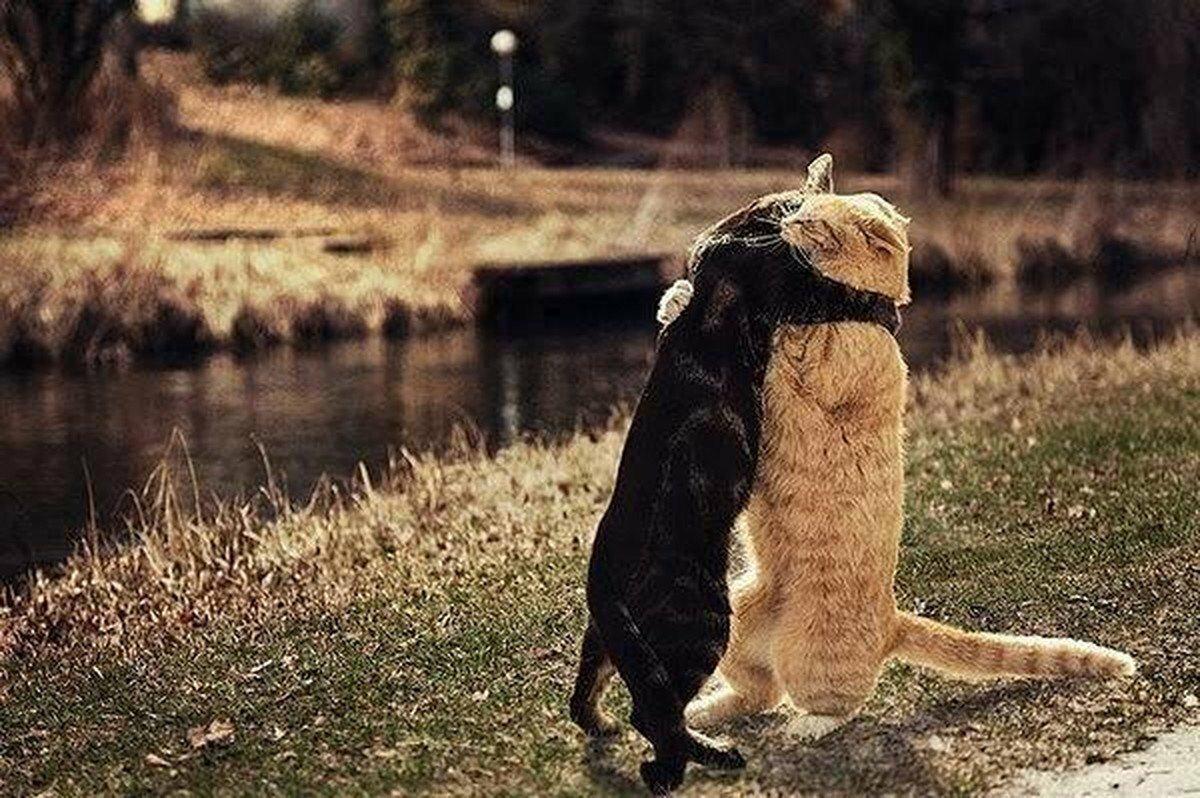 там животные фото прикол иди обниму можно