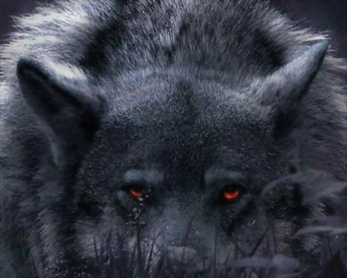 картинки страдающего волка этом видео
