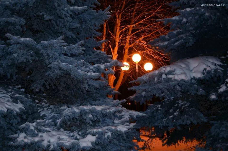 можно красивые картинки зимний лес ночью ибица вполне подходит
