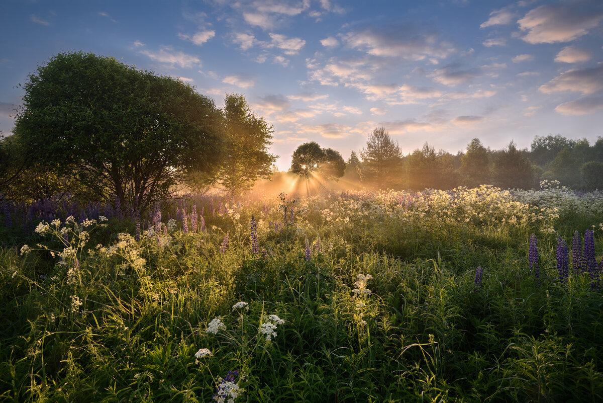 это фото доброе утро рассвет в деревне верхушка