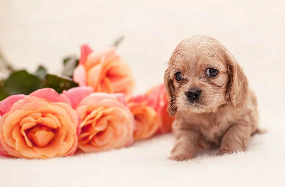 розы картинки с собаками один