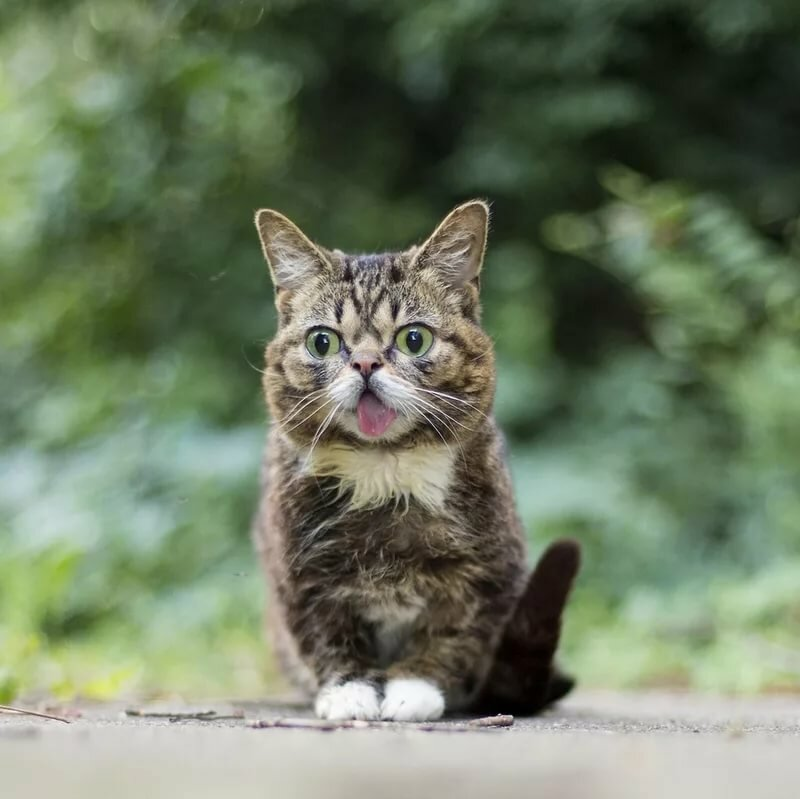 города удивительные фотографии кошек что