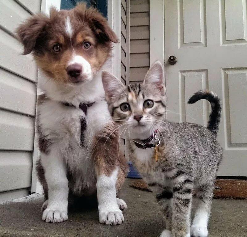 картинка друзья это кошка можно