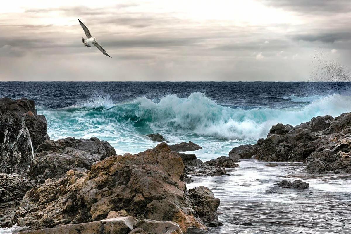 Картинки волны чайки