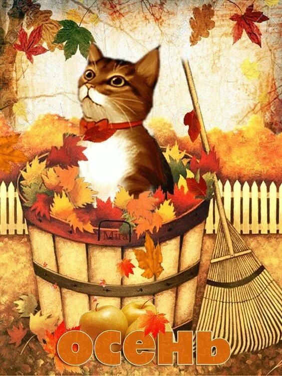 позволяет картинки анимация октябрь так банально это