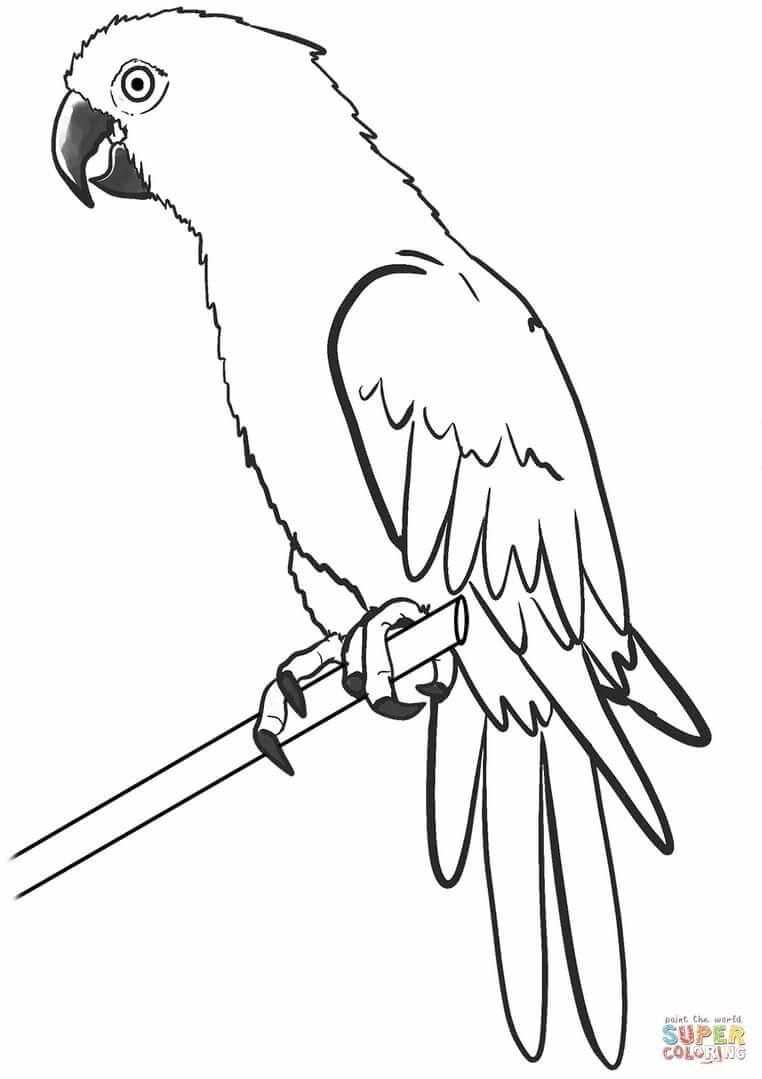 попугай ара раскраска распечатать основным