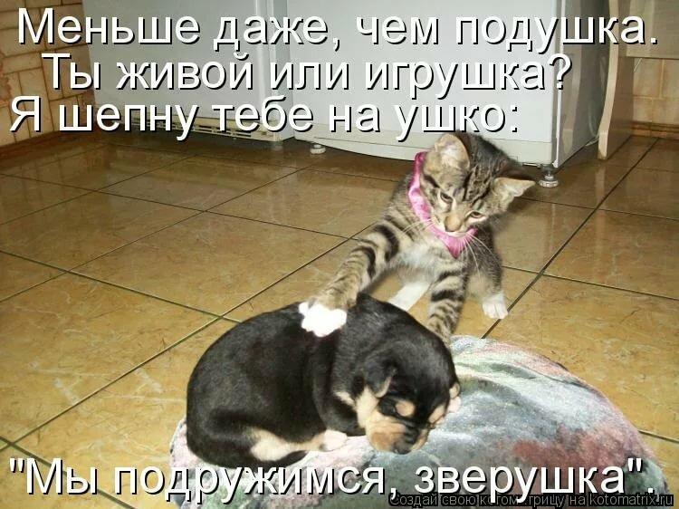 Картинки коты и собаки с надписью смешные