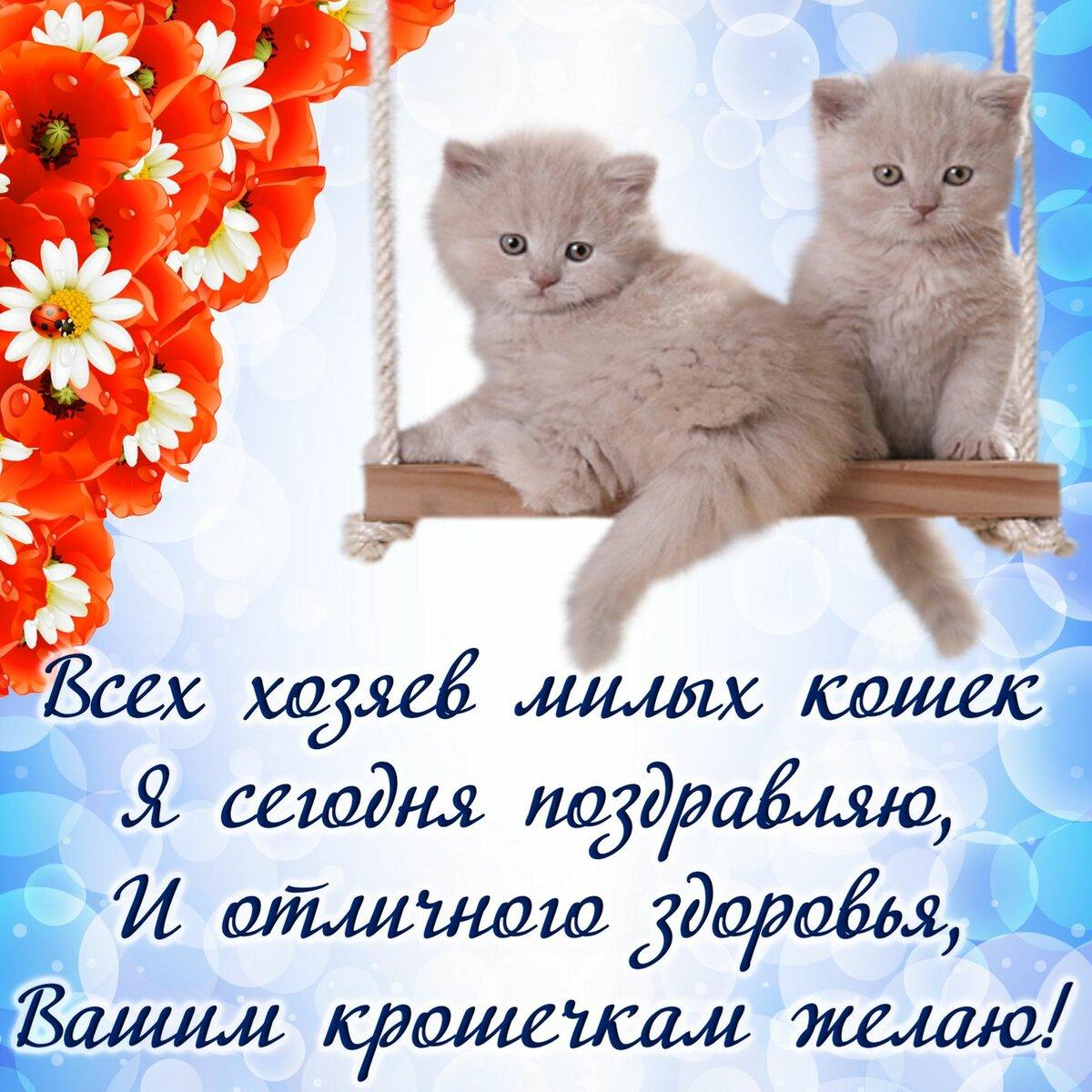 Поздравления со словами о кошках