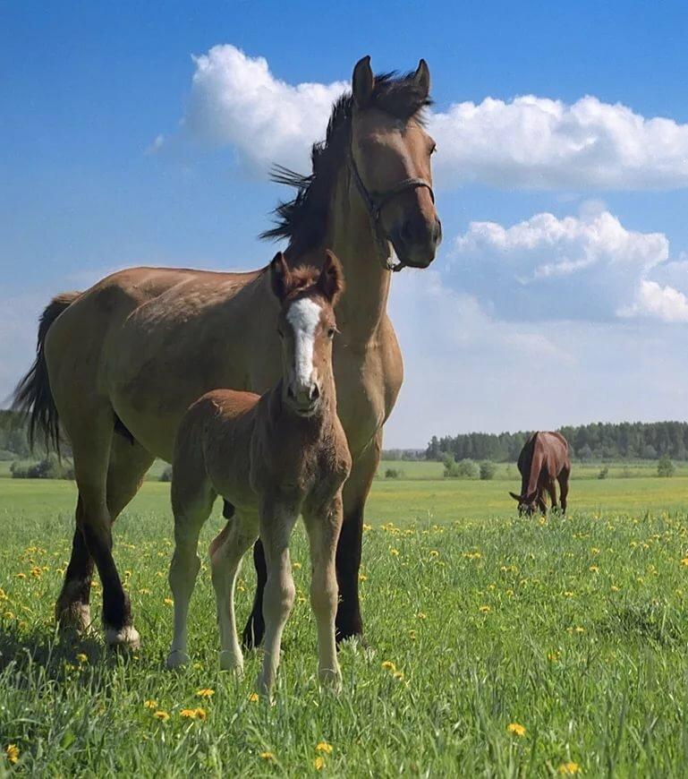 Домашние лошади в картинках