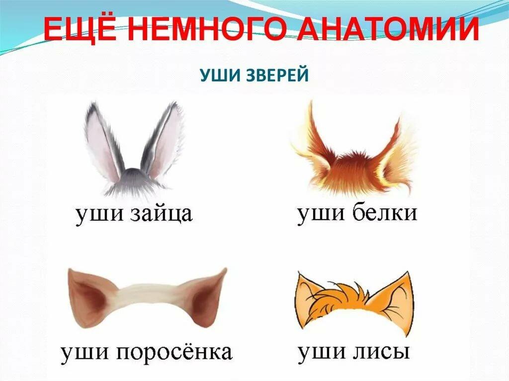 картинки ушей животных диких пасмурное