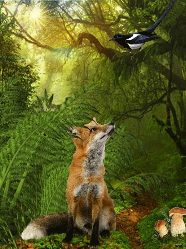Анимационные картинки лиса и лисята