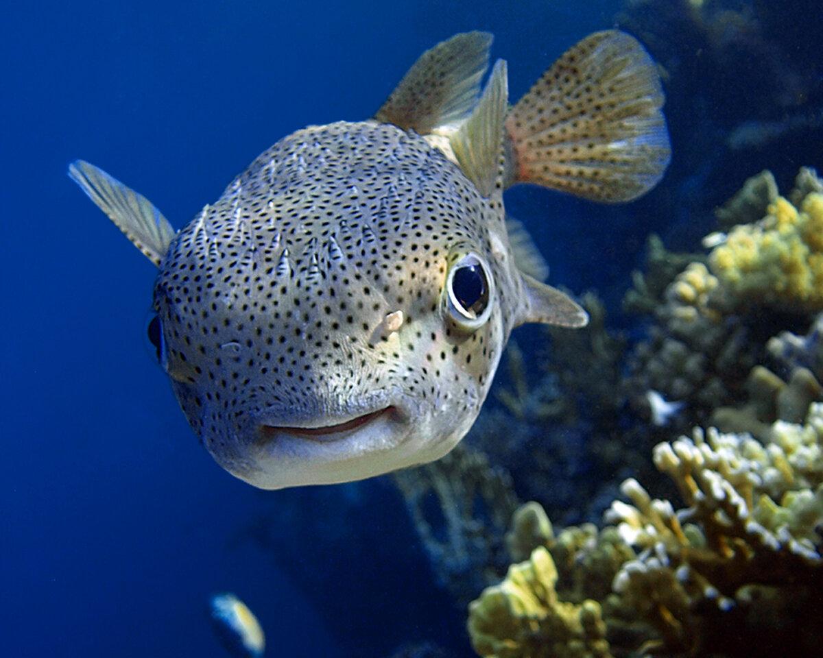 картинка велика риба модераторов переносе