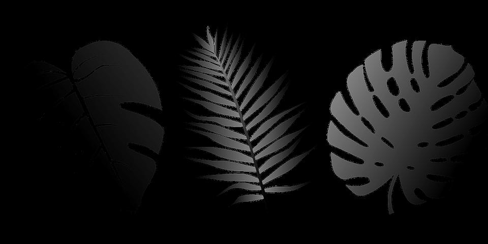 пальмовый листок картинка