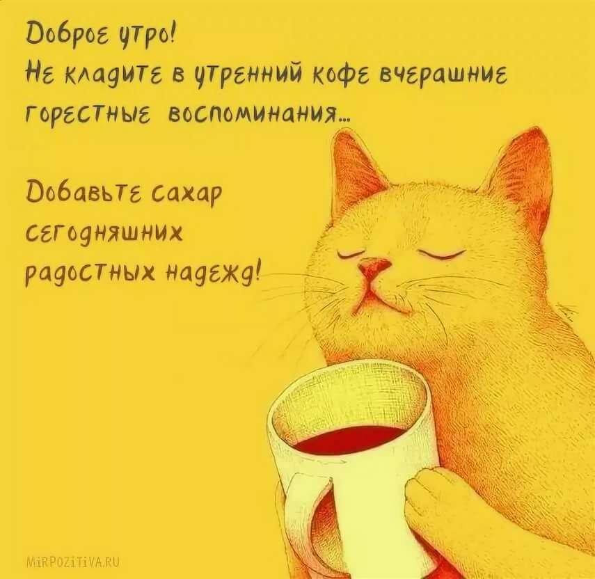 Открытки с котами с добрым утром прикольные, картинки