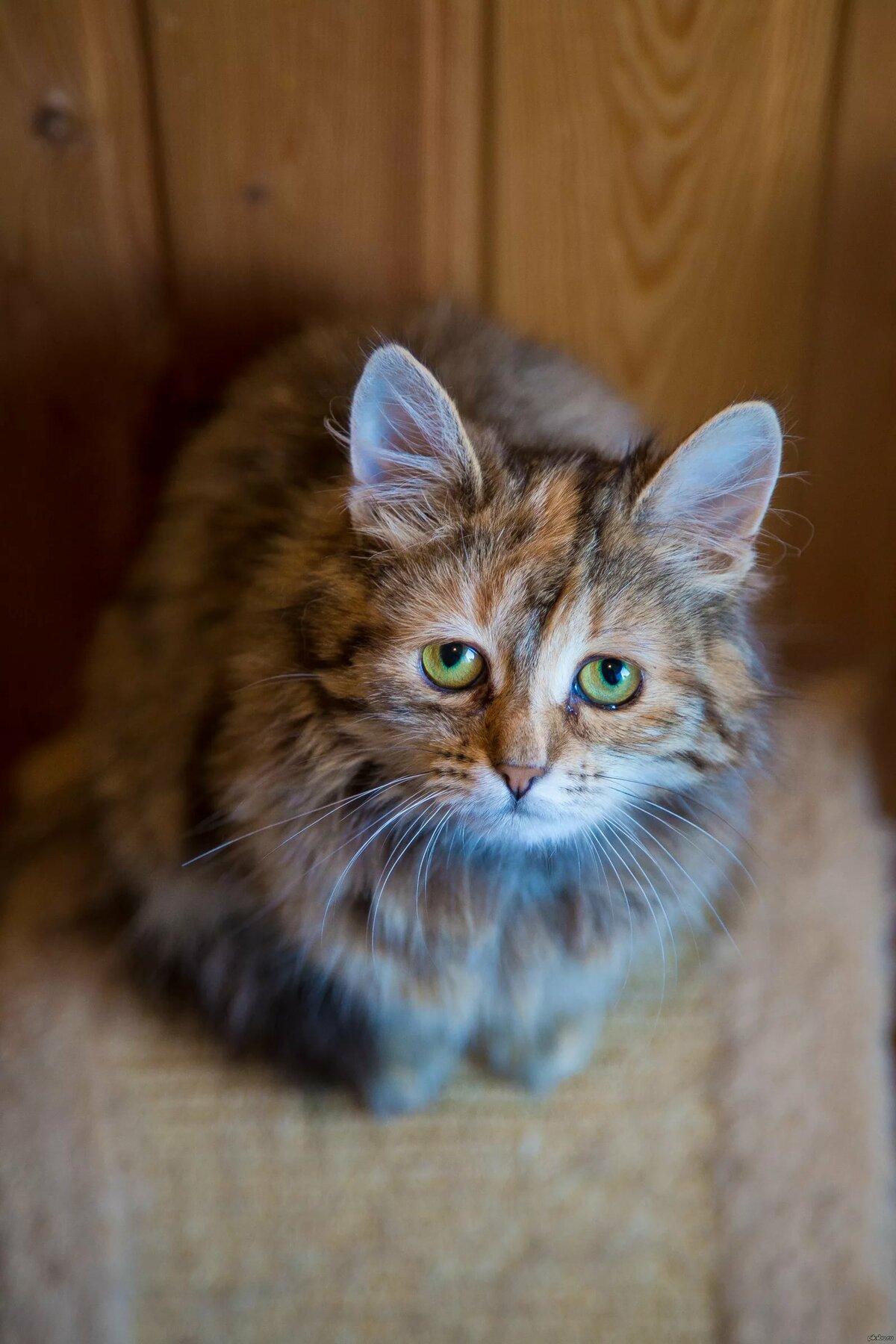 Кошка-печалька