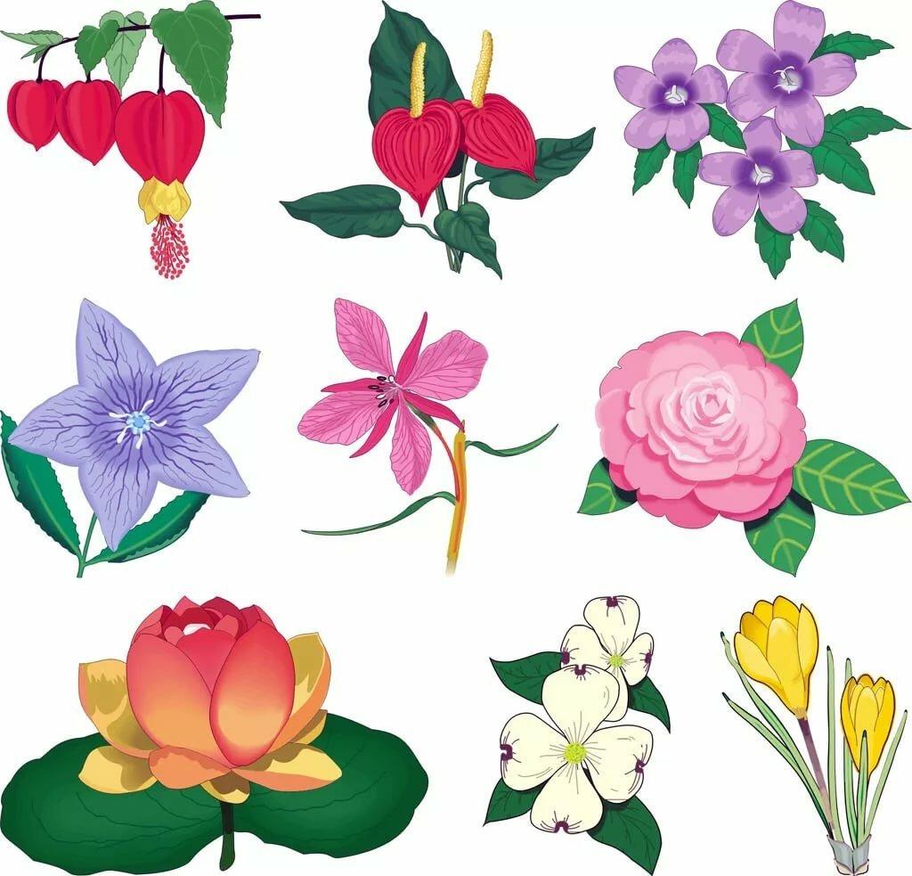 кто цветы картинки вырежи нужный цвет