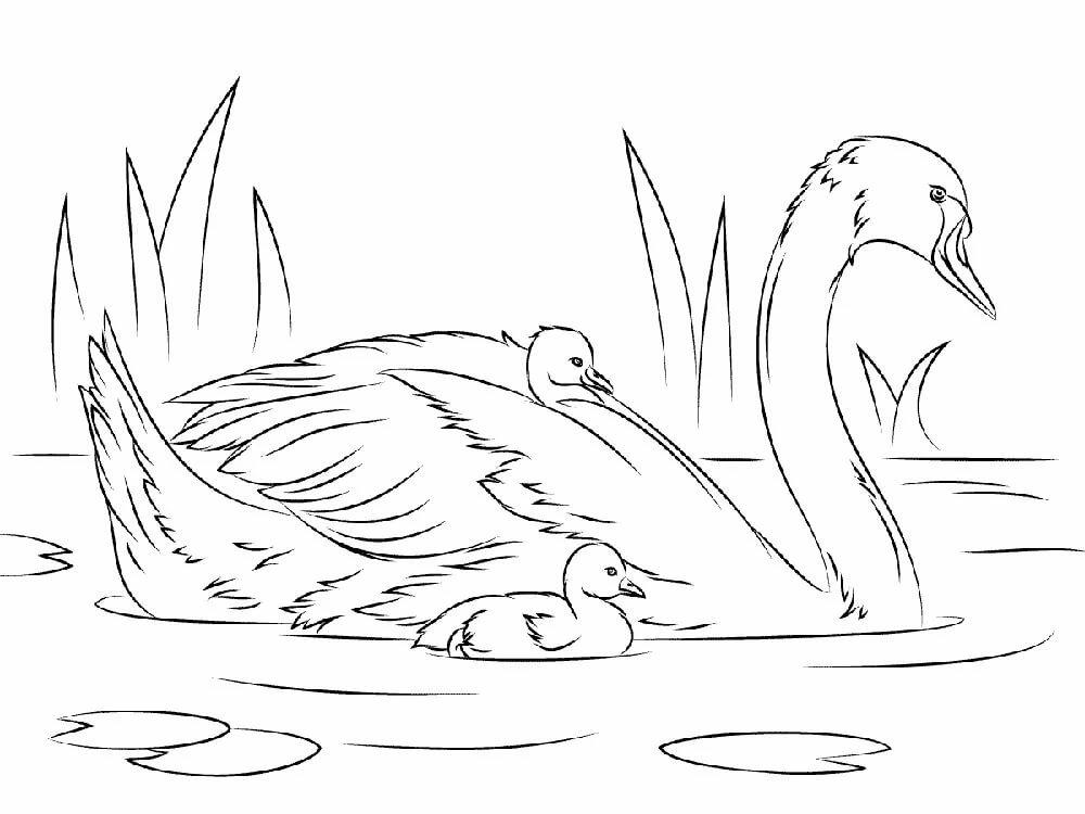 Лебеди картинки для распечатки