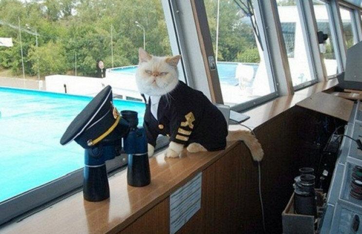 Моя, капитан картинки прикольные