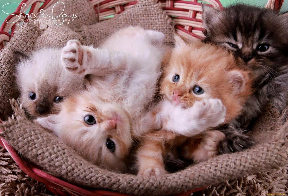 смотреть картинки самых милых котят