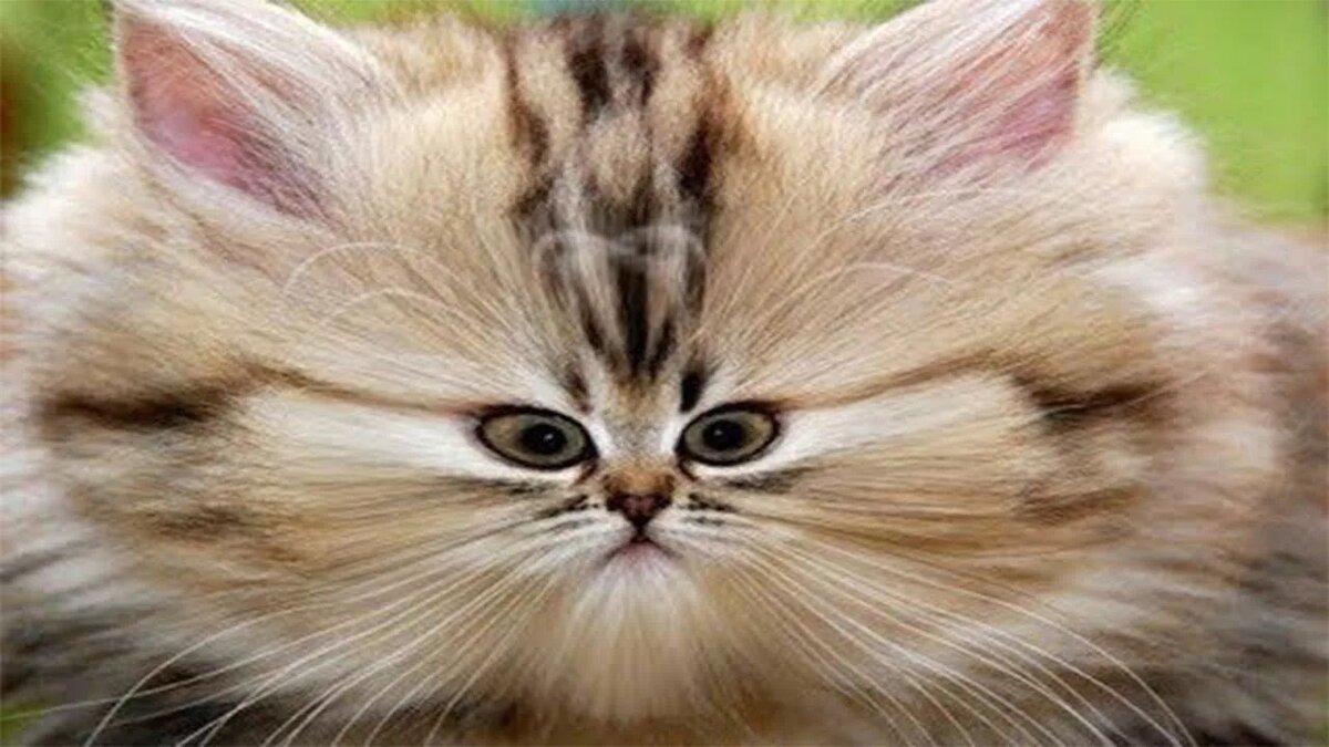 Картинки про котят смешных видео