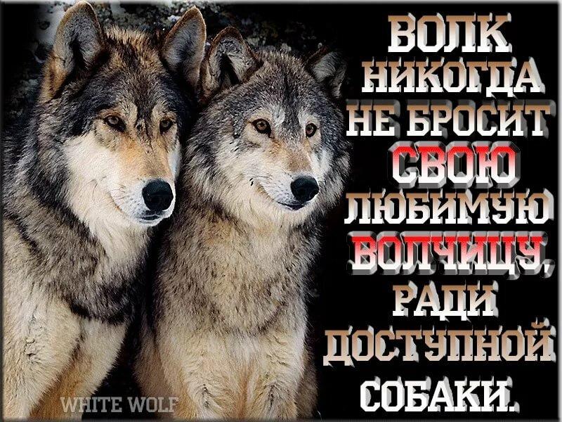 Картинки с надписью о волчицей