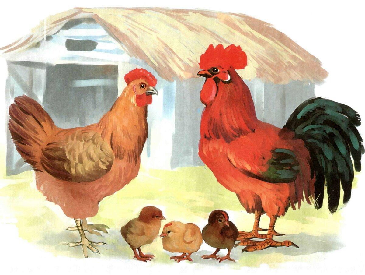 Картинки курица с цыплятами и петухом для детей, картинки