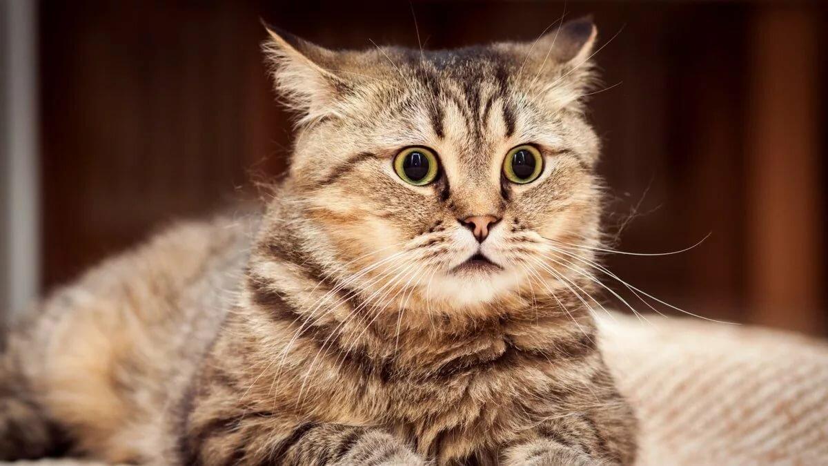 Прикольный котик в картинках, кинопленки