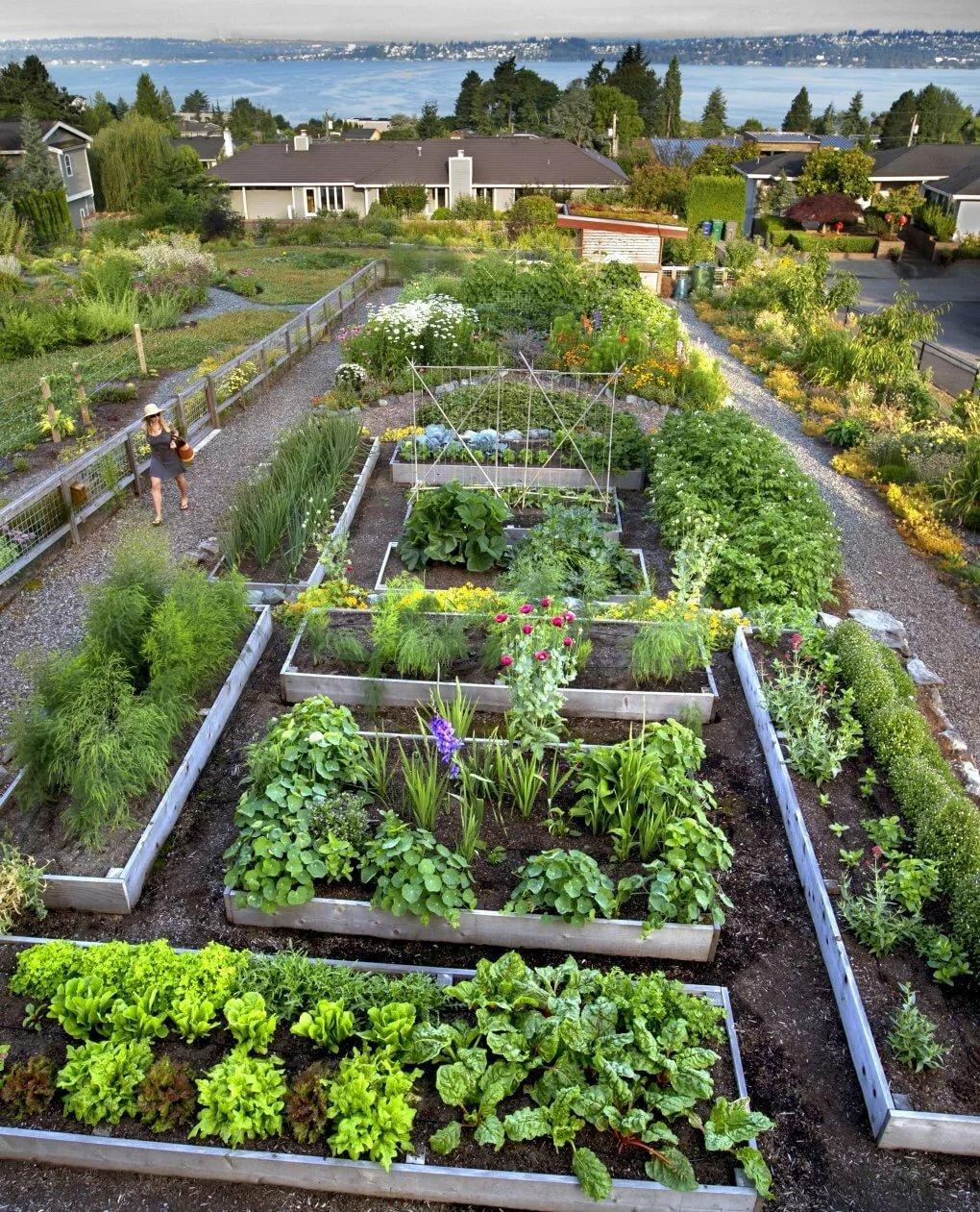 картинка красивого огорода долго думала, выбирала