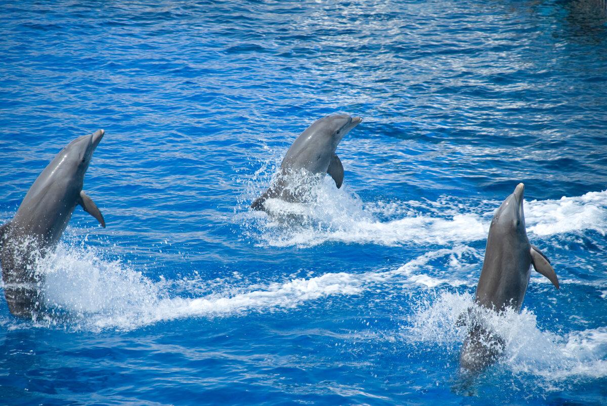 пейзажи океана с дельфинами фото