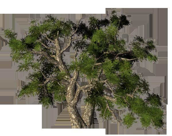 дерево какое-то