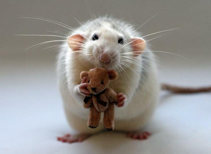 Алмазова, картинки с мышками