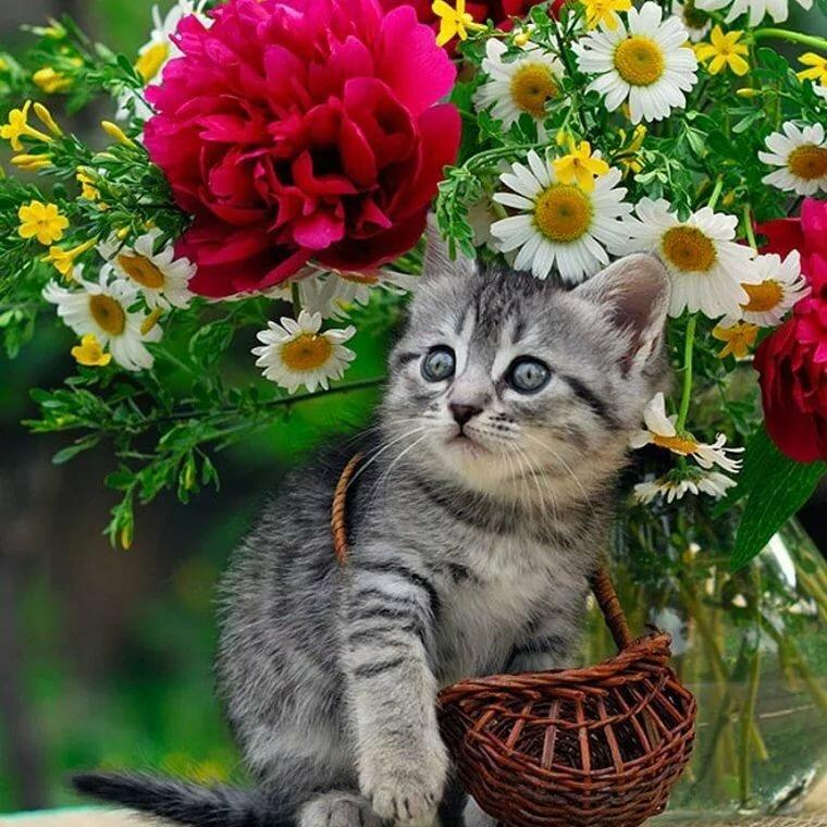 Открытки с котятами с цветами, церковью