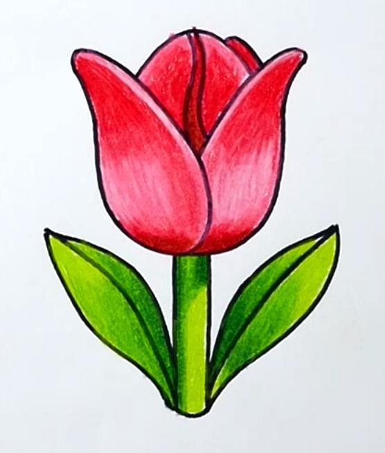 тюльпаны рисунки легкие