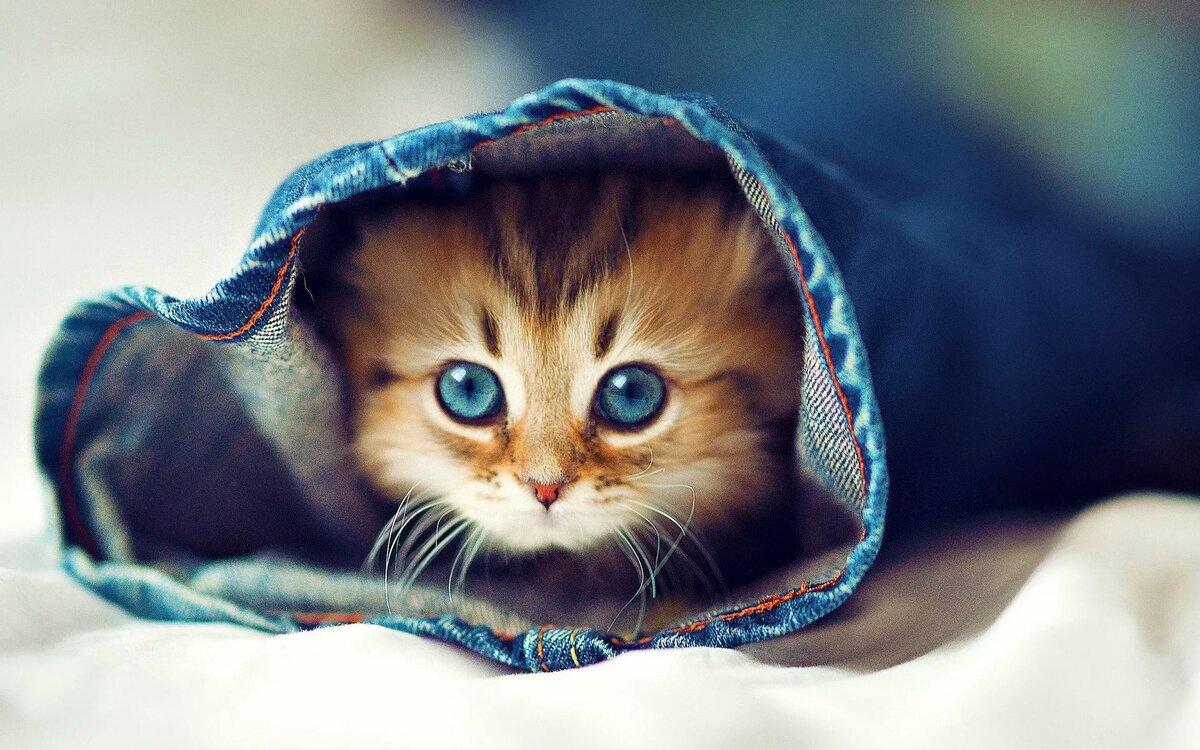здесь картинки котят в джинсах раз жизни
