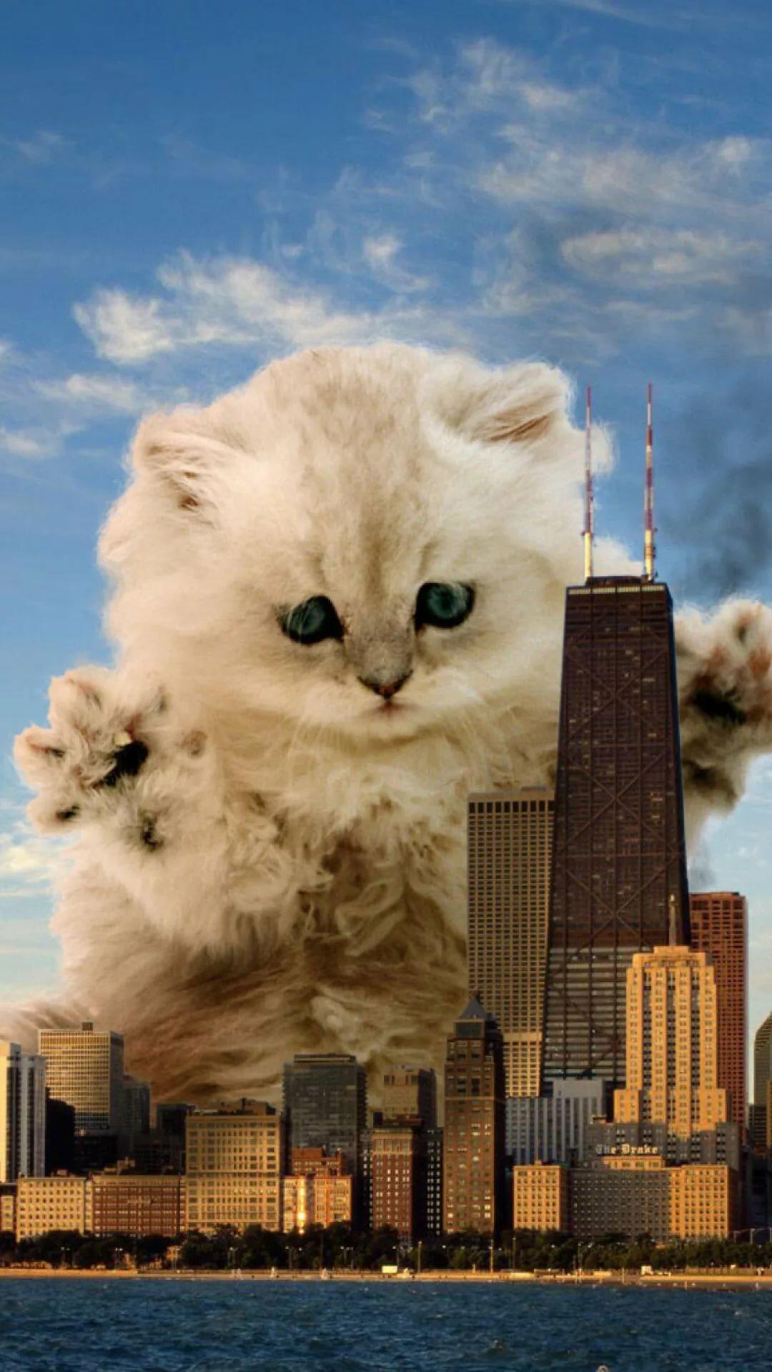 картинки коты апокалипсиса