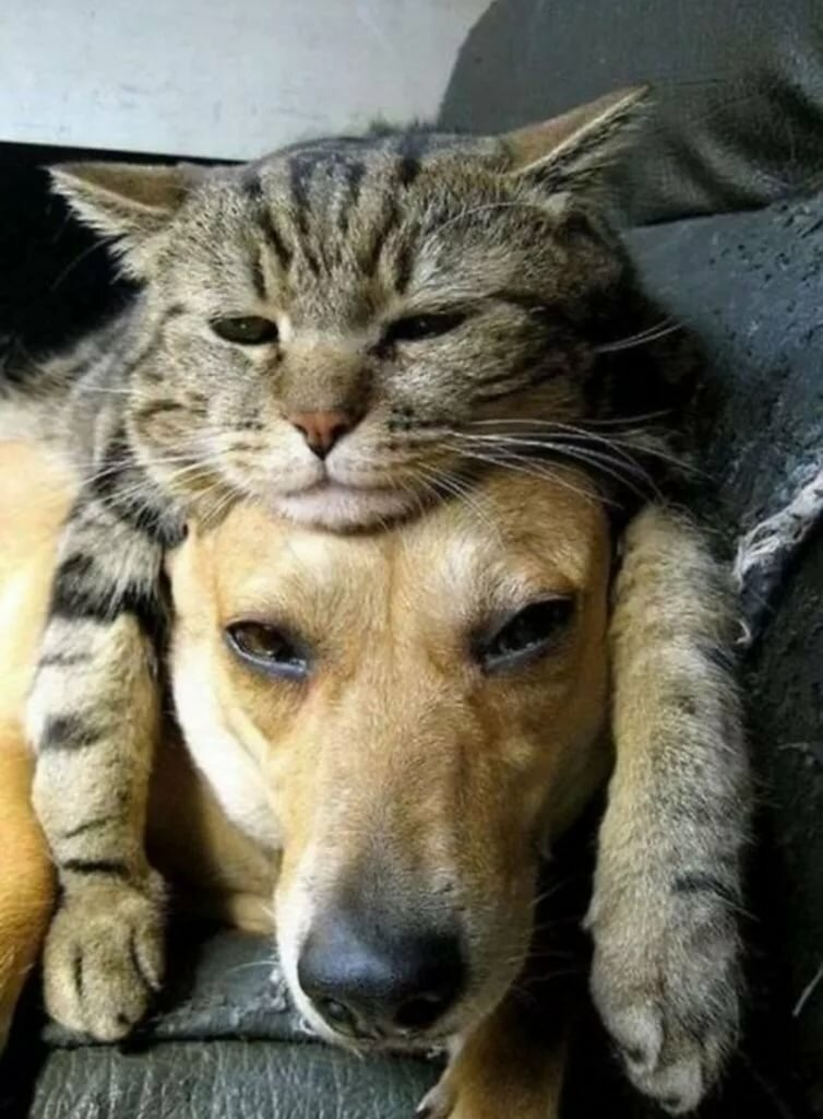Рождением, прикольные фото собаки кошки
