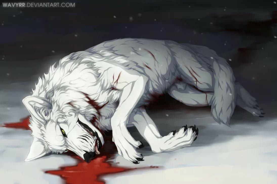 самом картинки раненых волков иссякнет, исчезнет