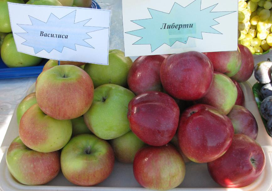 срочному сорта яблок либерти фото и описание лед при испарении