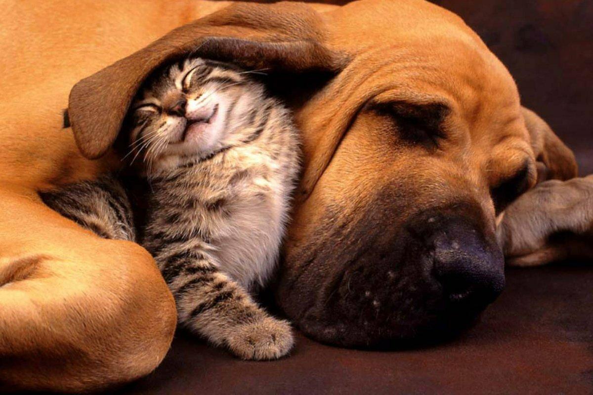Картинки смешные с кошками и собаки, рамки для
