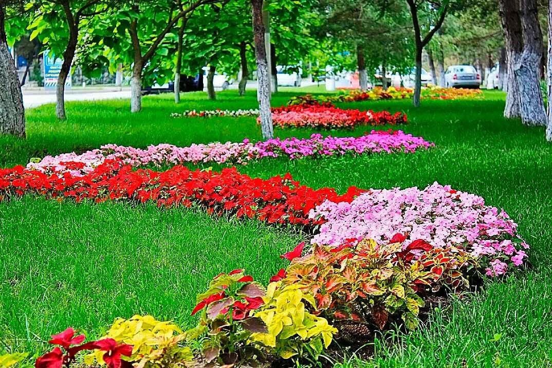 Картинки цветники клумбы фото