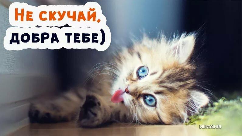 Кота, картинки не скучай милый друг