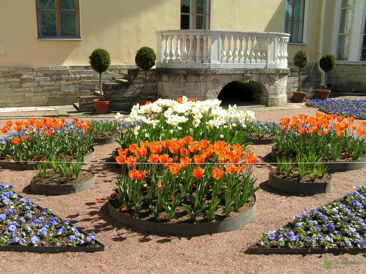 цветы для двора фото фотографии юной