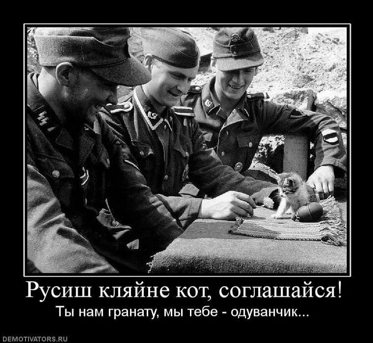 Нацист картинки смешные, полевые цветы добрым