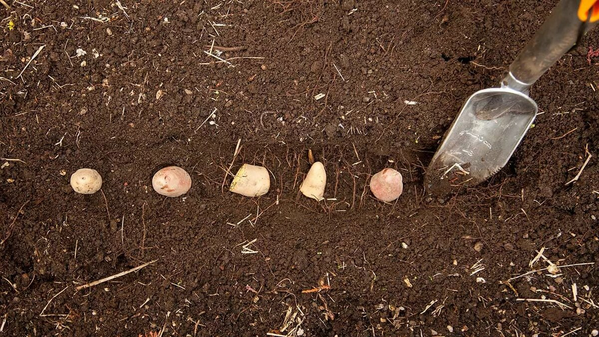 best soil for potatoes - cablecable.info