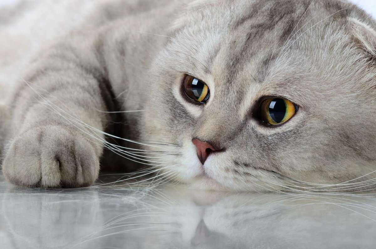 квн картинки грустные котята картинки этой