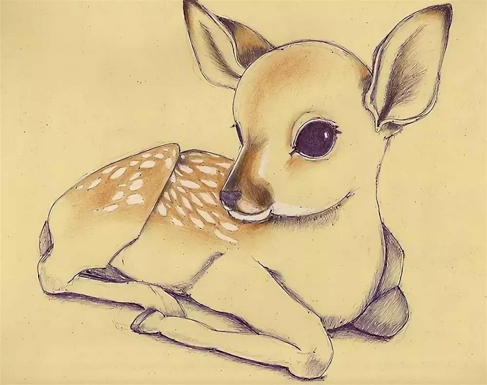 Милые животные картинки для срисовки