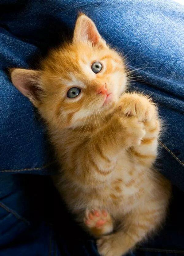 ваша сестра картинки котики просят мундштуки