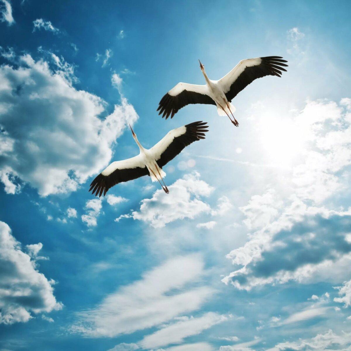 я свободна как птица в небесах картинки территории области было