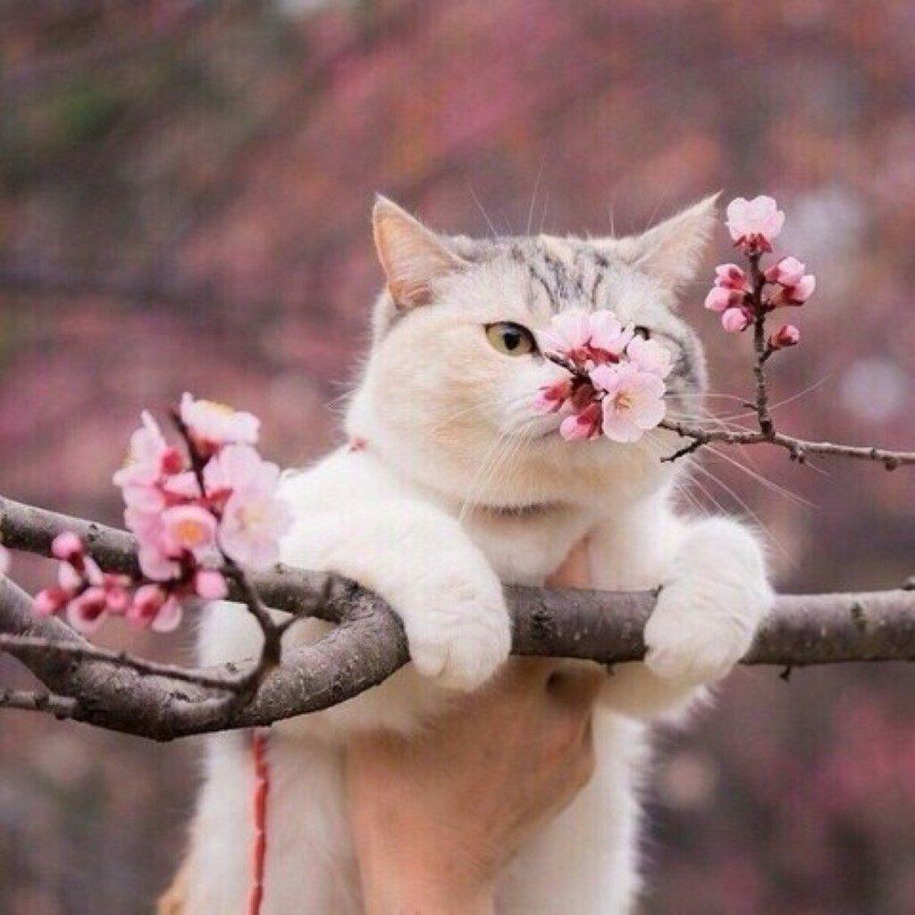 Весна картинки прикольные на аватарку
